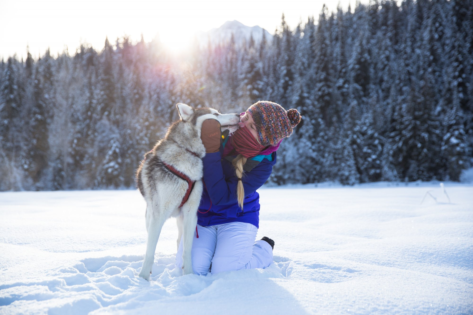 Puppy Love, Dog Sledding in Golden BC | Tourism Golden